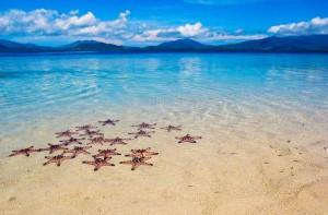 +stelle-marine-su-sabbia