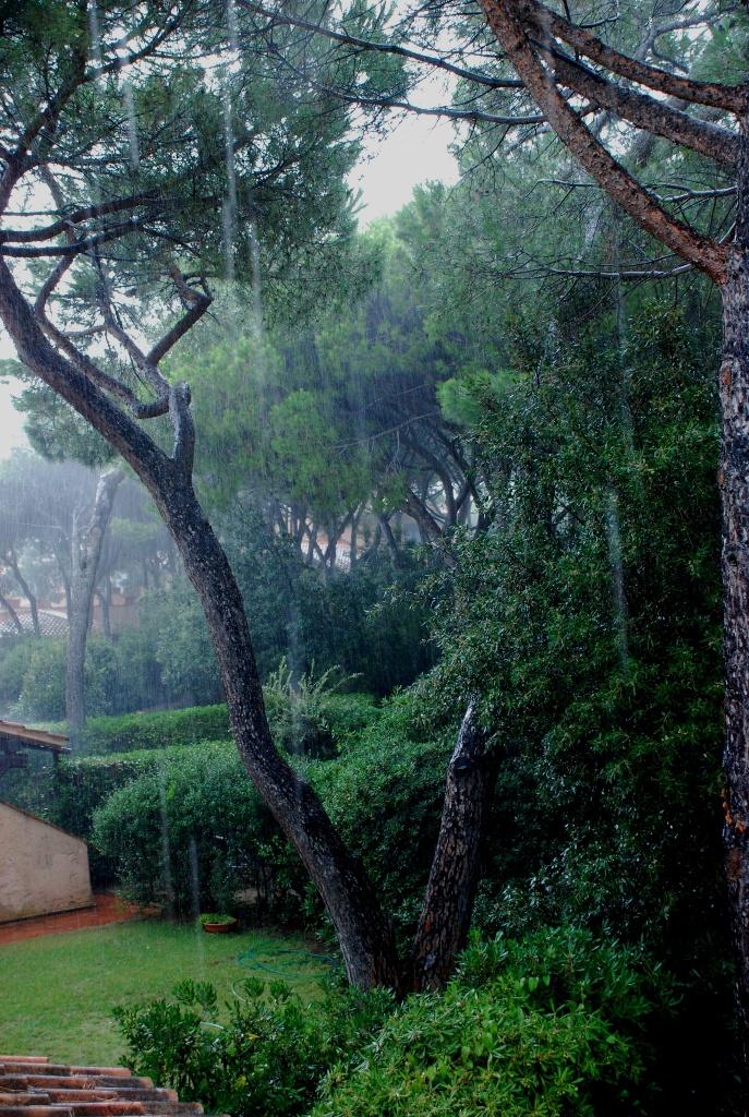 Poesie Blog Archive Pioggia Di Lugliopoesia Di Franco Muzzioli